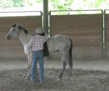 Saddling A Horse For The First Time – Part 1
