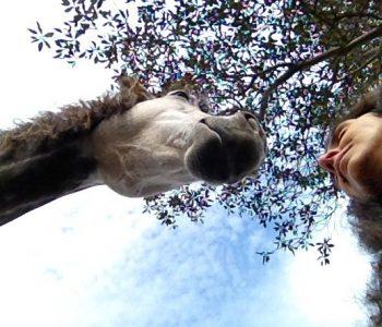 Meditation vs. Mindfulness with Horses