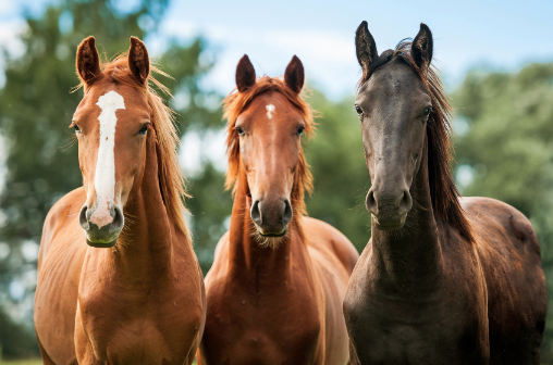 Are you feeding your horse like a horse? Part 3 of 3