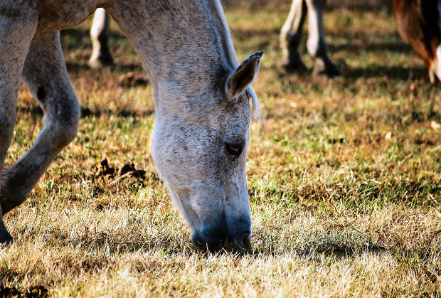 Are you feeding your horse like a horse? Part 1 of 3.