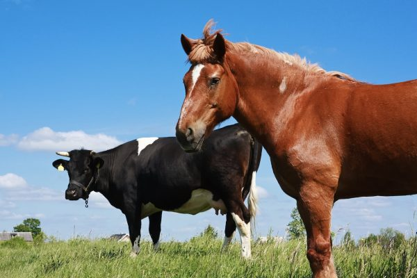 Are you feeding your horse like a horse ? Part 2 of 3
