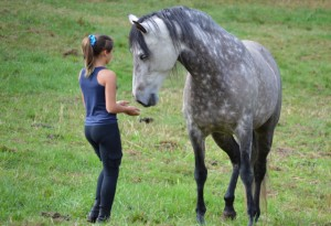 Bringing Energy Through Your Body When Working With Horses