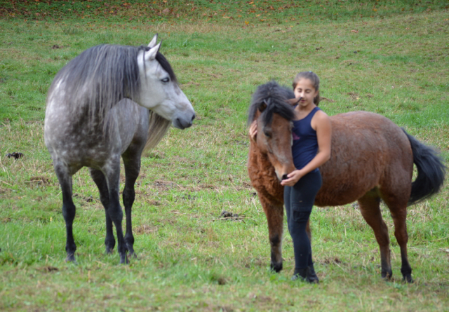 Horse Bullying Behaviour – A Story
