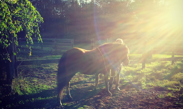 How to Use Spiritual Healing or Energy Healing with Animals