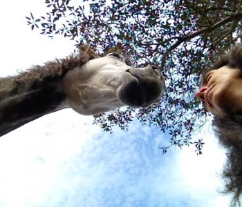 Meditating With Horses: Being vs. Doing