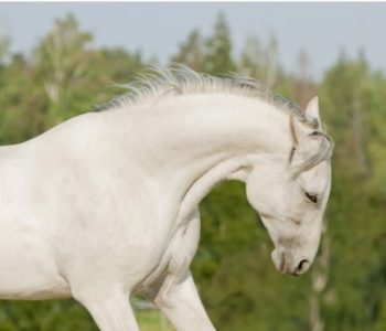 Magnesium to Relax Equine Muscles and Nervousness