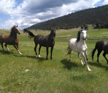 Working Horses in Circles – Part 1 – Effects on Limbs and Hooves