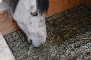 How To Choose The Best Hay For Your Horse