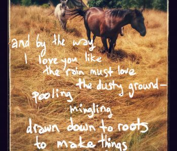 Oh, The Love Of Horses!