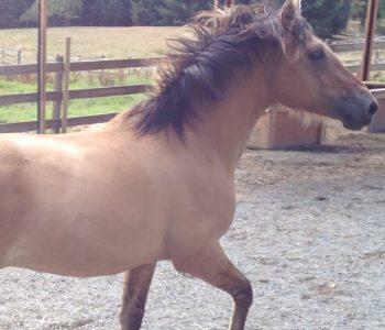 VIDEO: The Super Easy Way to Exercise a Stallion!