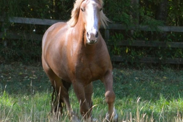 Transitioning A Horse From Hay To Pasture In Spring