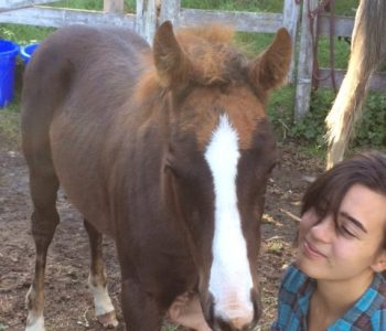 Baby's First Trim – Barefoot Trimming for Foals