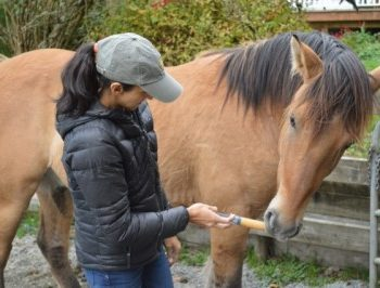 How I Got 2 Semi-Feral Horses to Willingly Take a Chemical De-wormer – Unhaltered