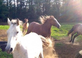 VIDEO: Horses Freerunning & Playing