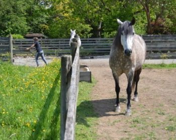 Equine Permaculture in Rainy Climates – System for Sustainable Pastures