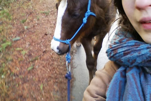 No Pressure, No Fear: Teaching Your Young Foal to Lead – Part 3