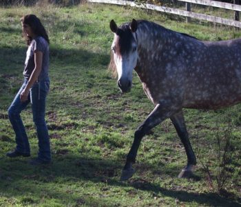 A Game Invented By a Horse: Stillpoint Practice