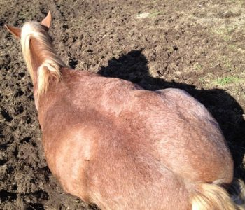 How I got on my Wild Horse for the First Time – Lying Down!