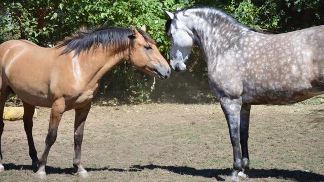 Courtship greet listen to your horse courtship greet m4hsunfo