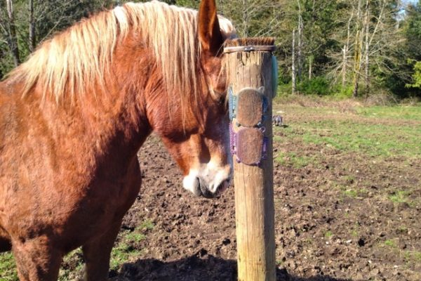 Affordable DIY Equine Scratching Post Solutions