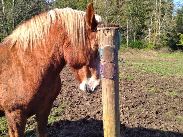 Affordable DIY Equine Scratching Post Solutions | Listen To