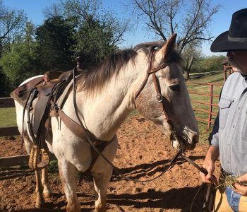 My Friend, My Boy, My Horse – Bob