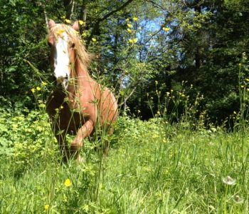 Herb Blend Recipes for Horses