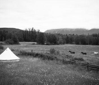Rewilding the Herd – Settling In