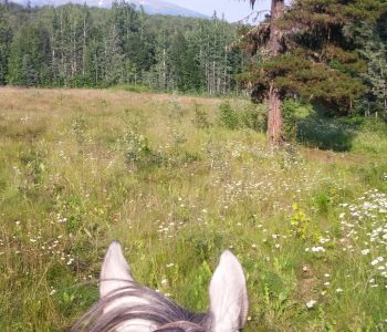 Riding, Relationship, and Mutual Trust