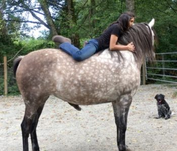 Healing Trauma from Riding Stored in the Horse's Body