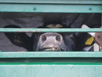 Add Your Voice to Animal Transport Law