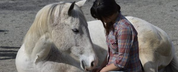 When Horses Teach Mindfulness – It Sticks