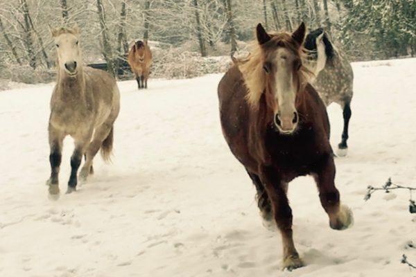Snow Ponies + New Music!