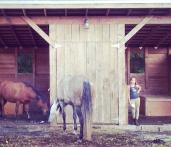 Working with Craziness Using Equine-Assisted Therapy
