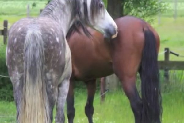 A Horse Teaches His Friend To Overcome Fear