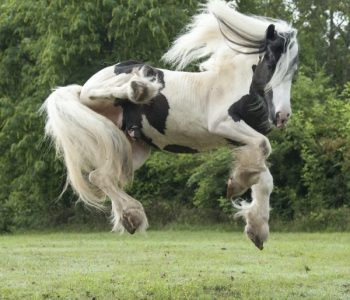 Creative Ways To Make Your Own Horse Jumps