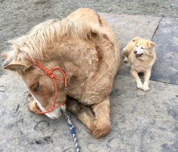 Equine Vasectomy, Castration, and the Karmic Wheel