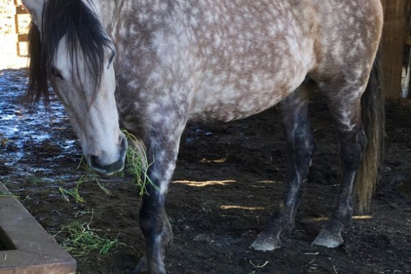 Does Your Horse Have Chronic Protein Deficiency?