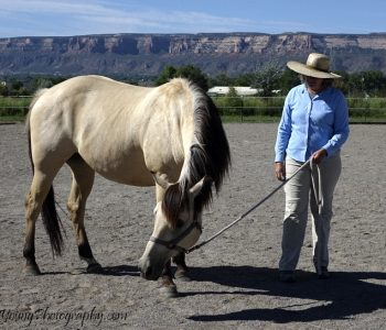 Giving Horses Their Voice – What if they say No??