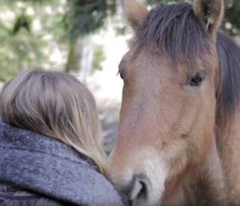 Horse Teaches a Man how to Change his Energy – A Personal Story