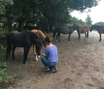 Close Encounters of the Equine Kind – Meeting the New Forest Ponies