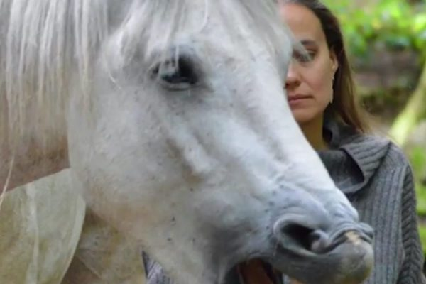 In The Jaws of a Horse