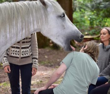 Meditation Circle with Horses Gets Jiggidy