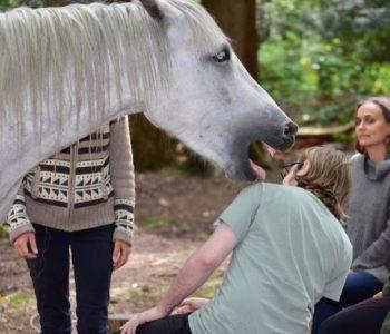 Meditation Circle with Horses Gets Jiggidy
