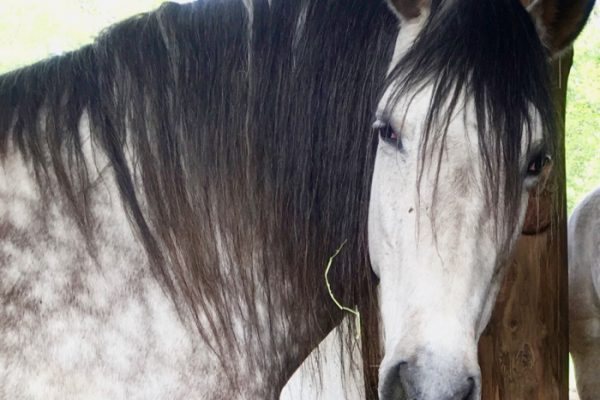 In The Jaws of A Horse – Part 2