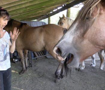 Equine BodyTalk & Animal Communication Healing Session