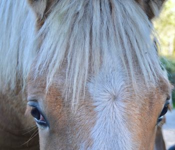 Gaining the Trust of an Abused Horse