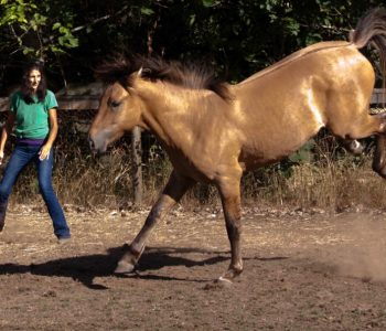 Bolting Horse: Disasters are Opportunities for Connection