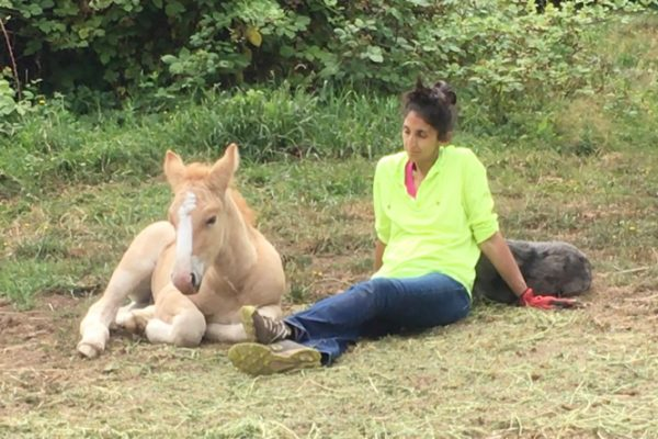 Will 2-week-old Foal Stay Lying Down with Me when Mama Walks Off?