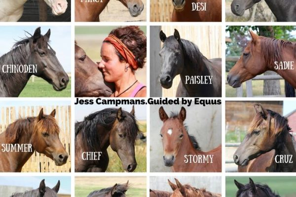 Intuitive Readings from the Horses – Choose One!